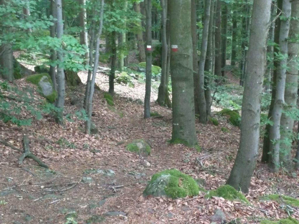Trail am Arberblick