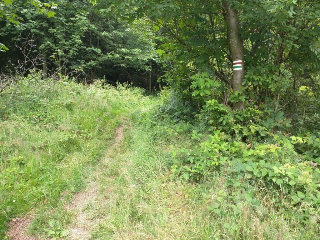 Trail bei Pec