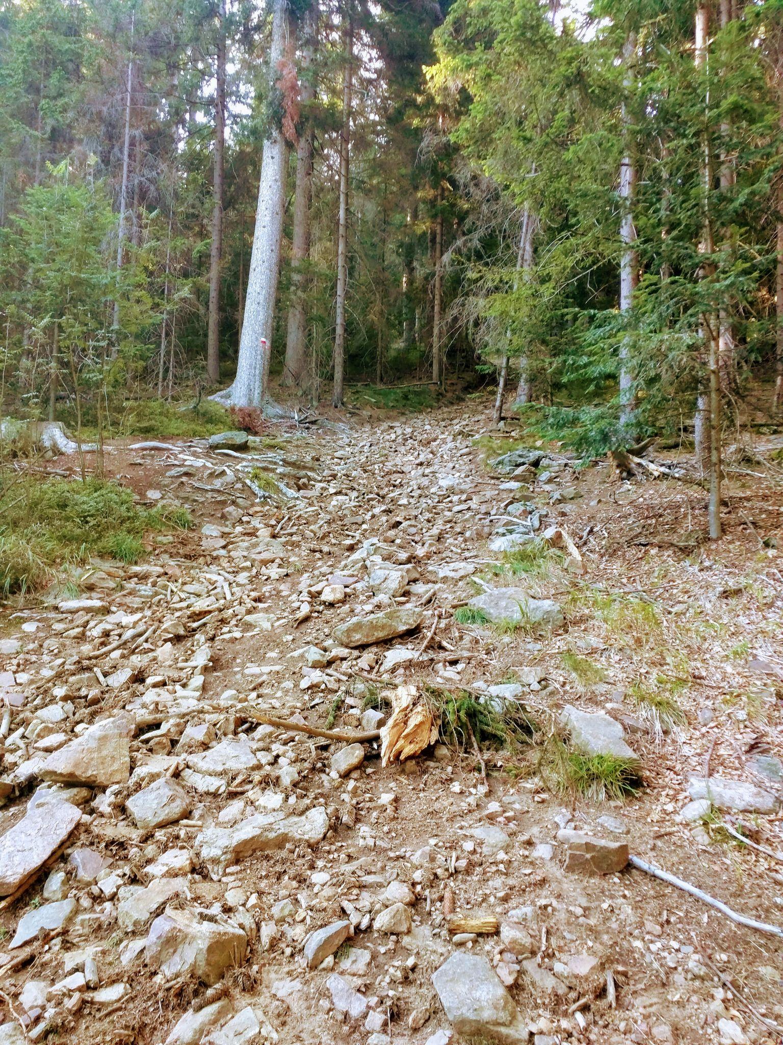 Abfahrt vom Kaitersberg
