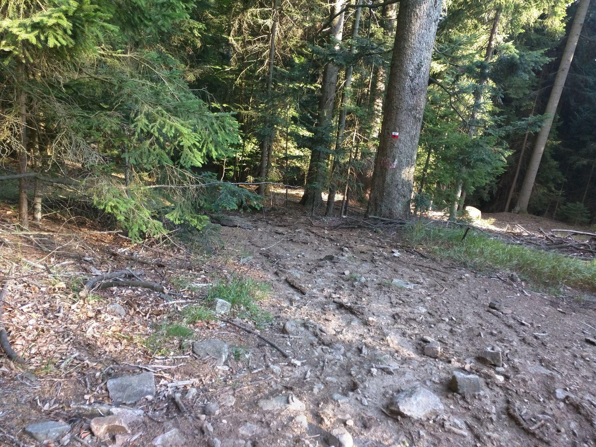 Trail am Kaitersberg