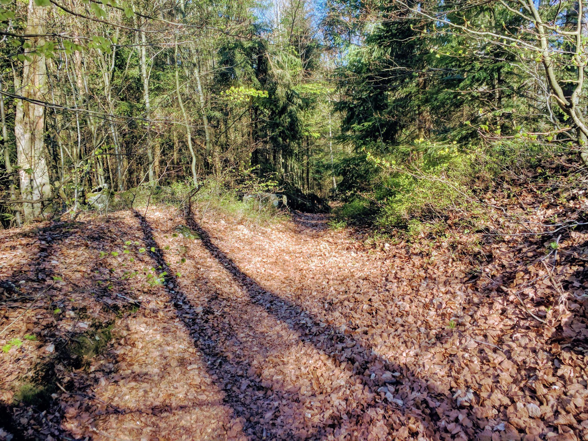 Schöner Trail nach Herzogau