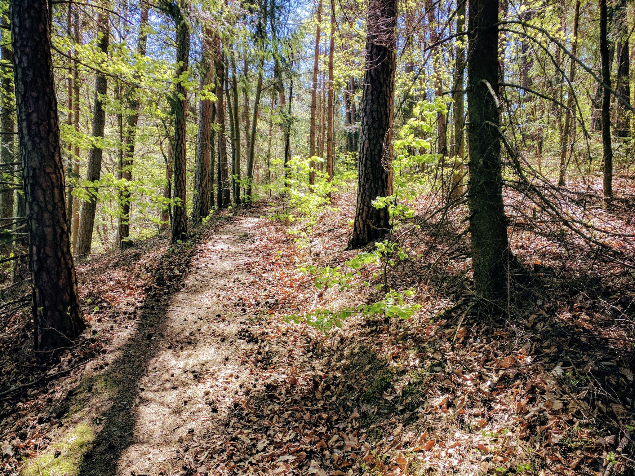 Schöner Trail am Eixendorfer See