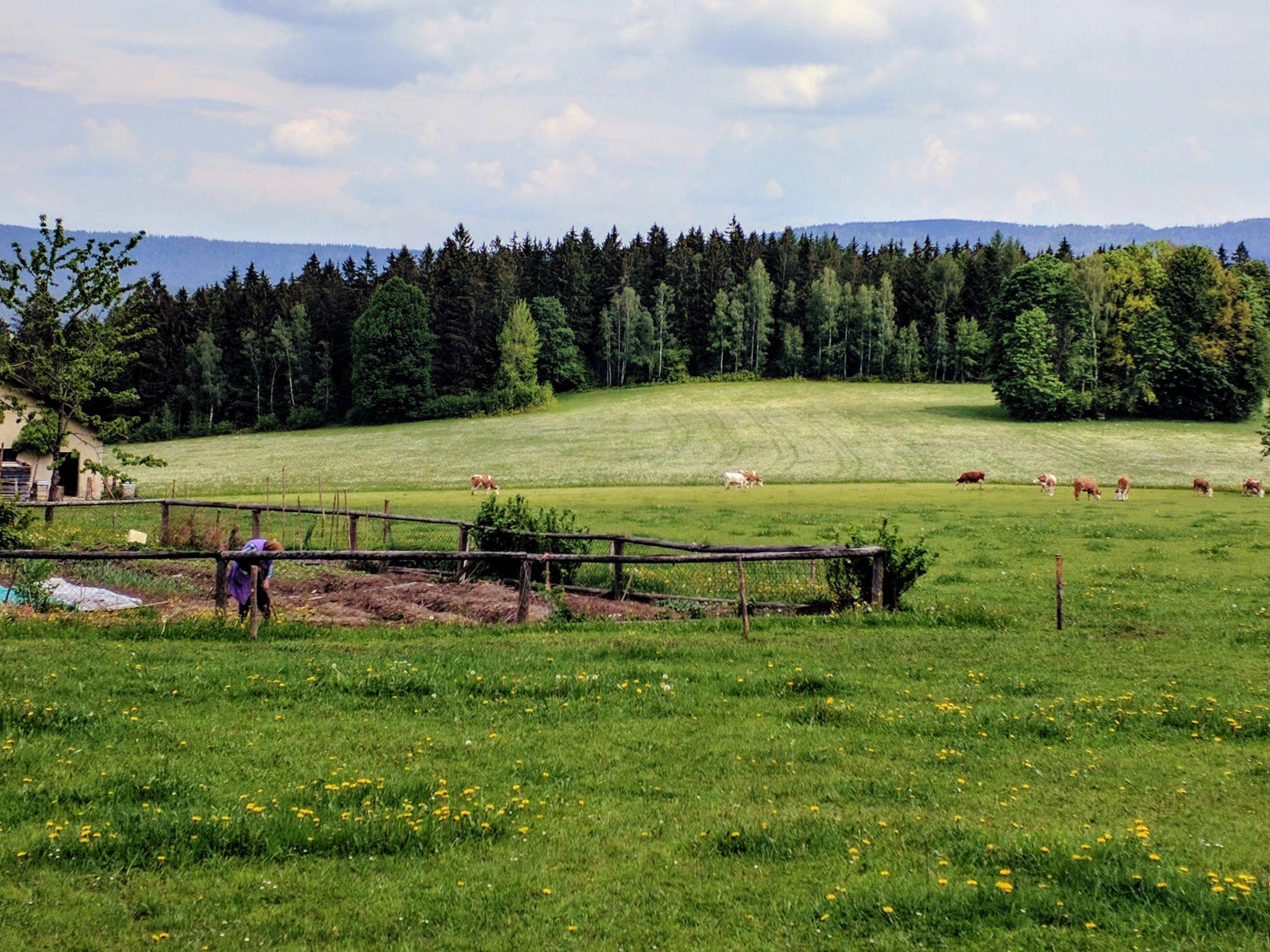 Vorderwaldeck