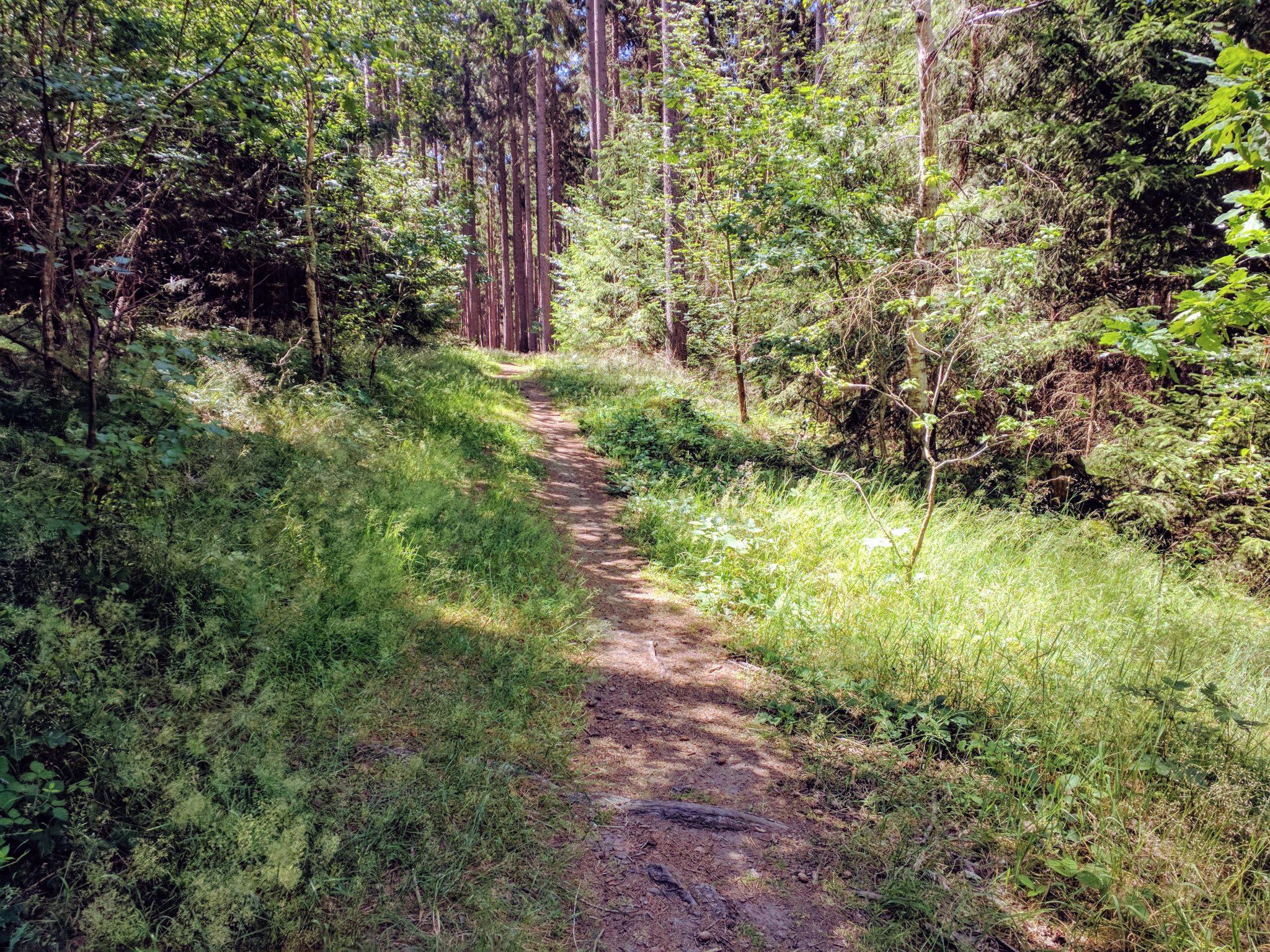 Einsamer Trail bei Domazlice