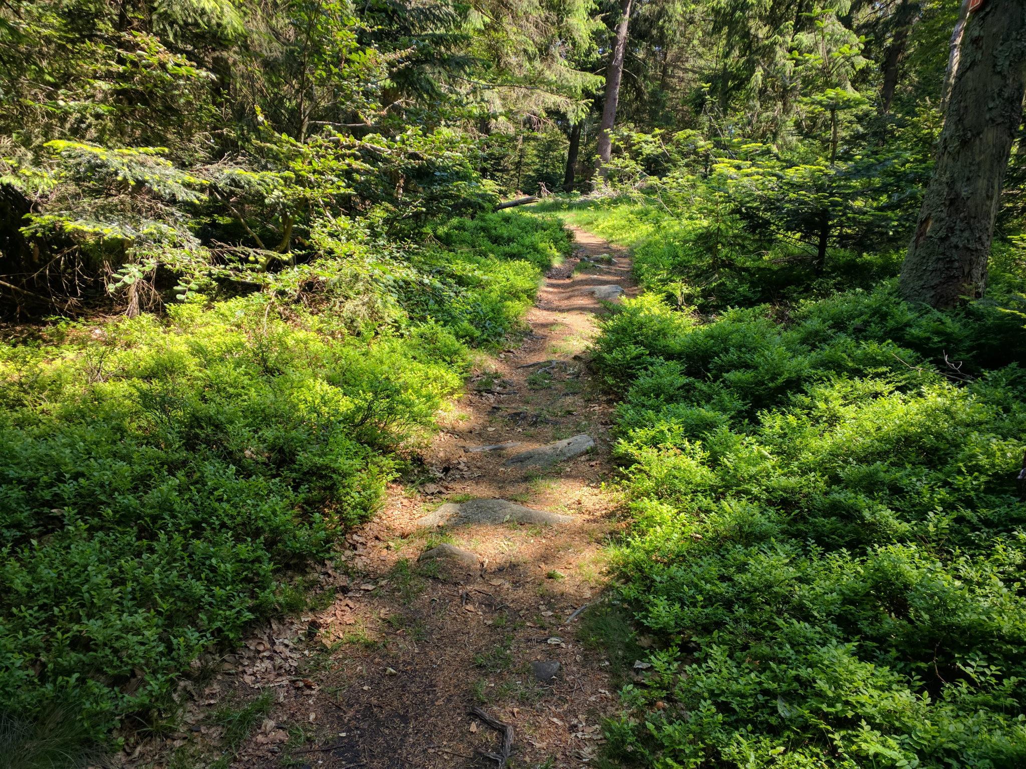 Schöner Trail zwischen Berghaus Loderhart und Dreitannenriegel