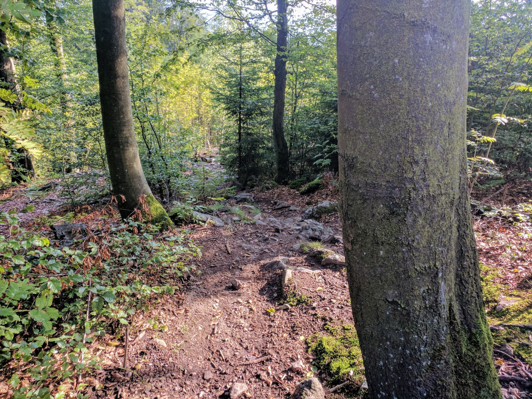 Trail am Reiseck