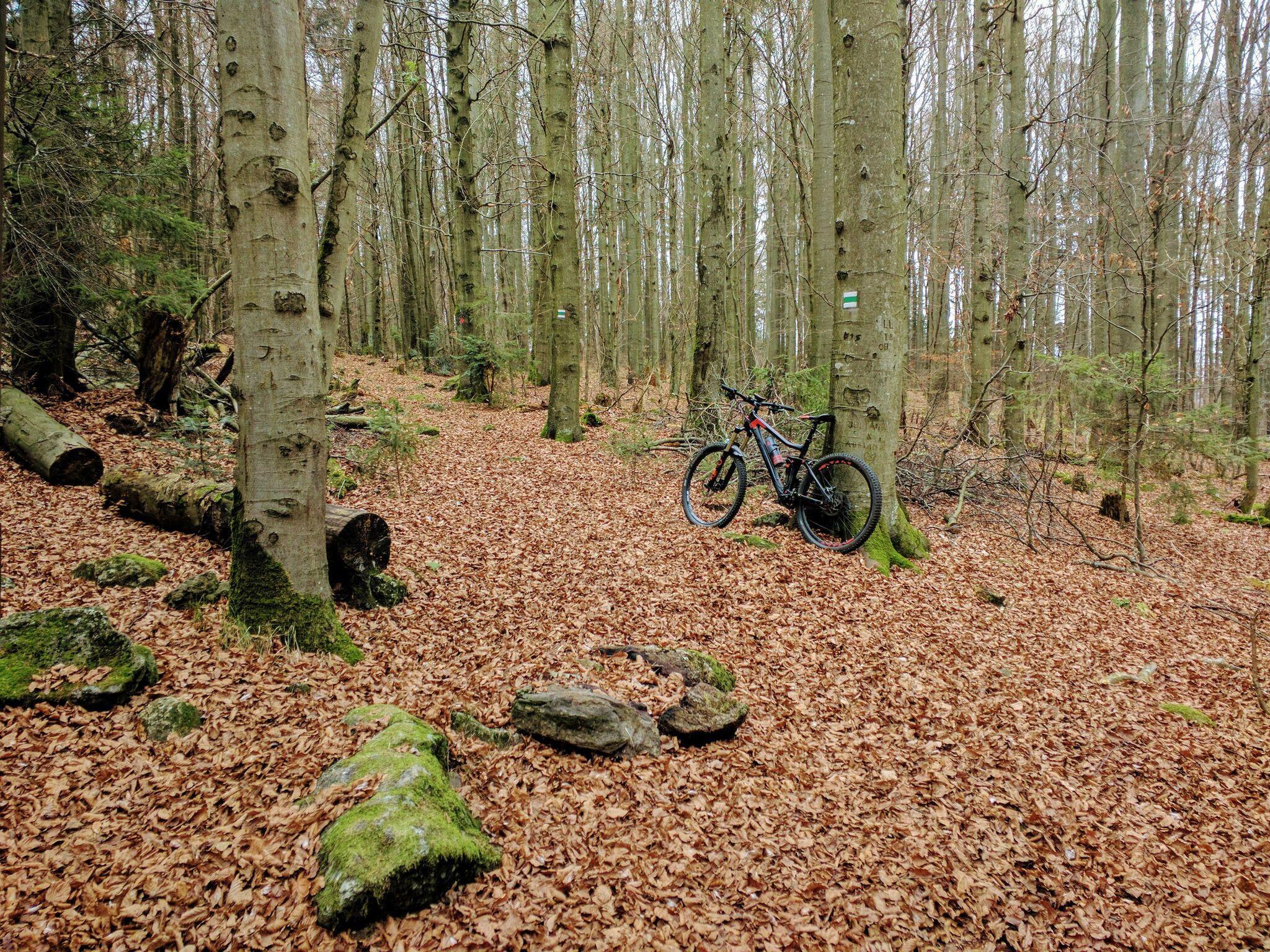 Beginn des Trails hinter der Dreiwappenhütte