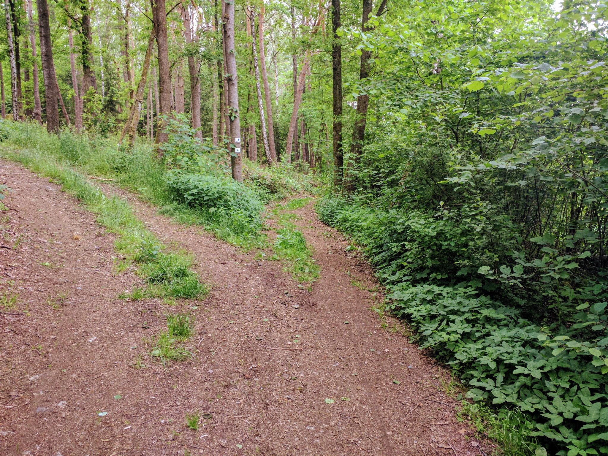 Wald nach Zeltendorf
