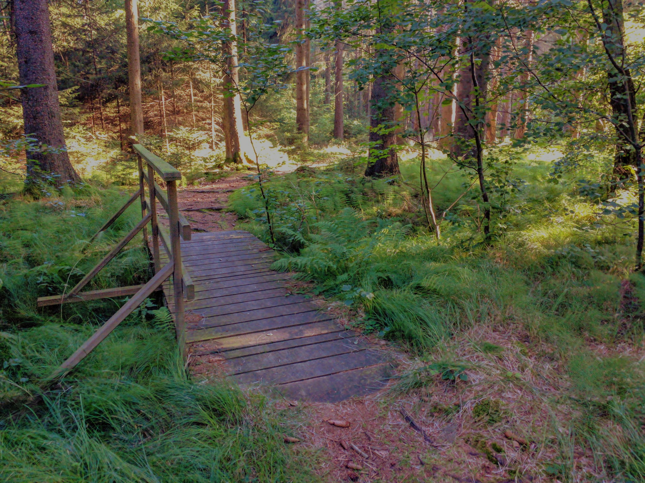 Schöner Waldweg kurz vor Babylon