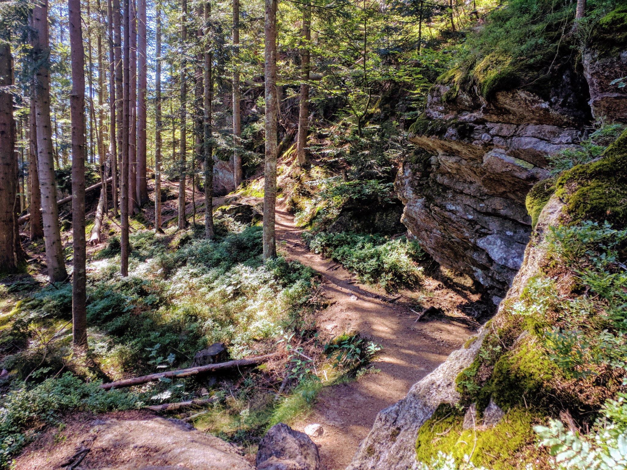 Trail in der Nähe von Bodenmais