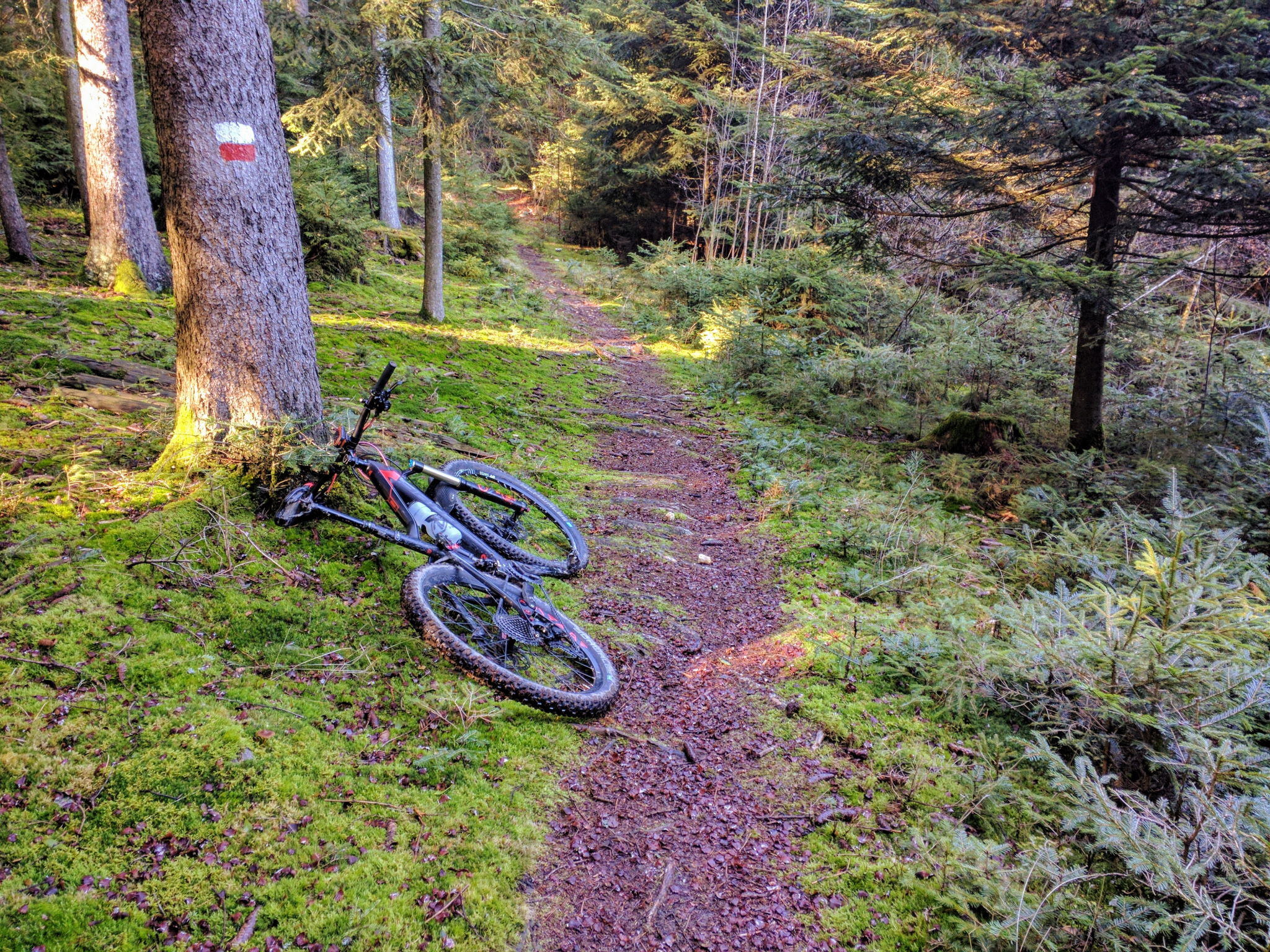 Trail am Hirschpertberg bei Obergschaid