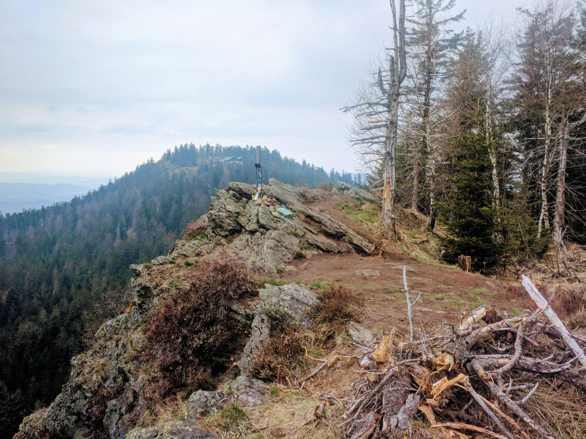 Blick vom Steinbühler Gesenke zum Kaitersberg