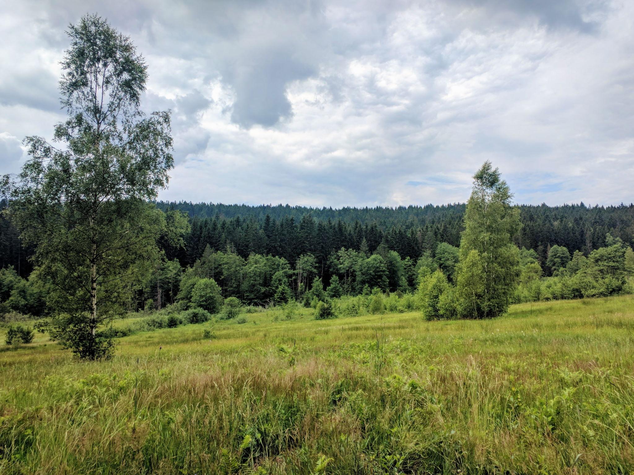 Stockau-Wiesen
